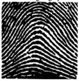 Fingerprint 200